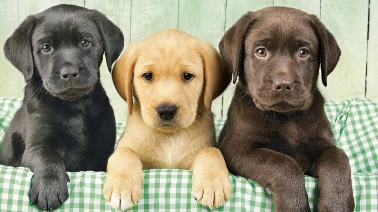 Топ-10 пород собак для квартиры — выбираем из самых лучших