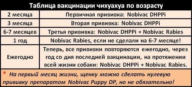 Прививки собакам по возрасту таблица - цена в zoostatus