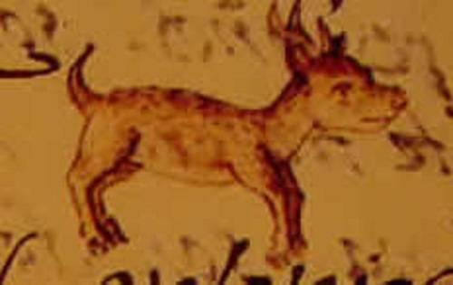 Чихуахуа длинношерстные: фото, происхождение породы, характер,