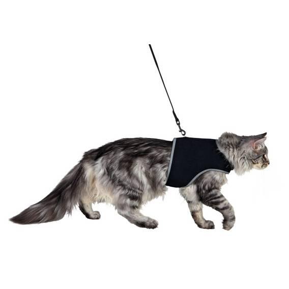 Как собрать и одеть шлейку (ошейник) на кошку для прогулки: пошаговая инструкция на фото и видео