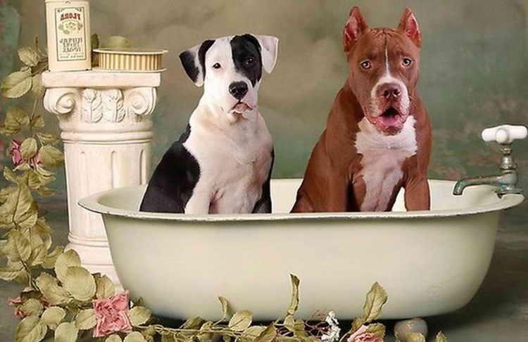 Когда можно купать щенка?