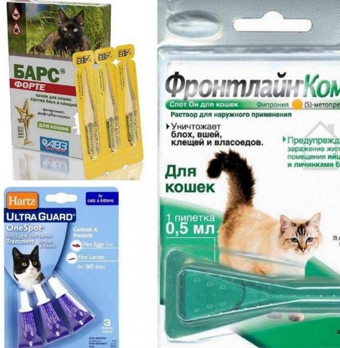 Капли на холку от глистов для кошек – самый простой и безопасный способ избавления от паразитов