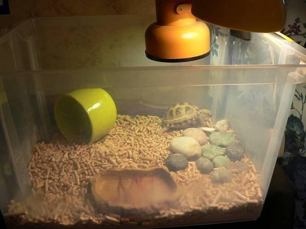 Черепаха на даче — особенности содержания экзотического питомца. виды, террариум, чем кормить. фото — ботаничка.ru