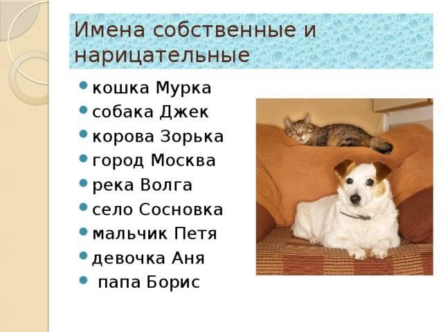 Клички для собак мальчиков: необычные и запоминающиеся имена