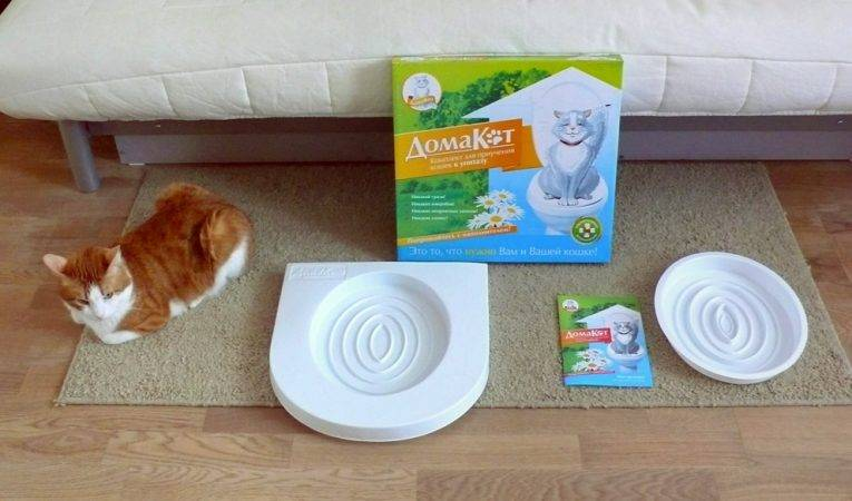 Как приучить кота или кошку к унитазу | система приучения, видео