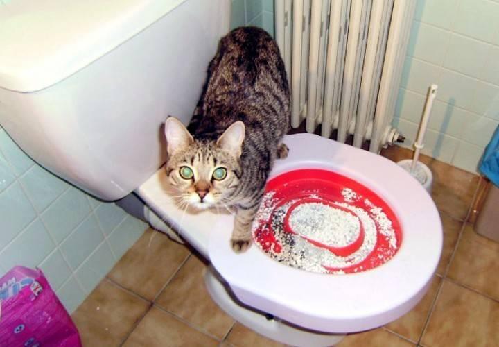 Почему кошка часто ходит в туалет по маленькому по чуть-чуть: часто пьет и ходит писать, как часто должна писать кошка