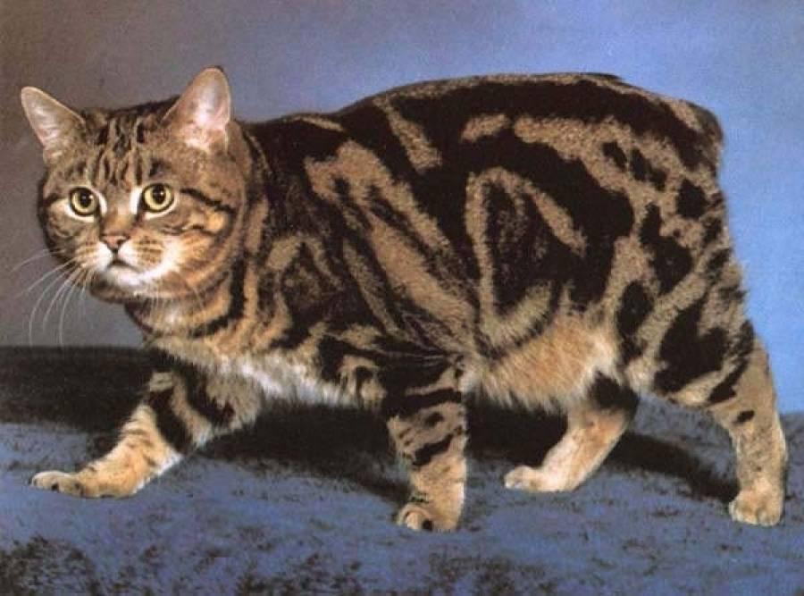 Беспородная порода: особенности самой большой группы кошек