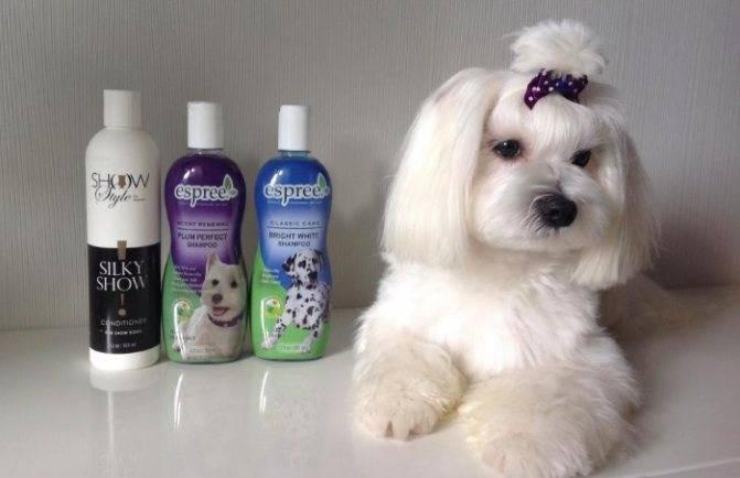 «за» и «против» средств для людей и ответ на вопрос, можно ли мыть собаку человеческим шампунем