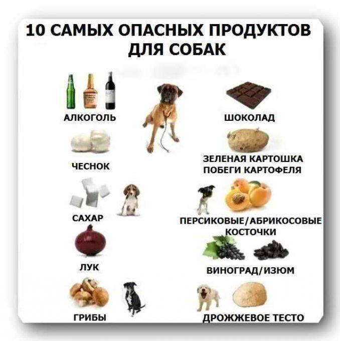 Полезные продукты для собак - список продуктов