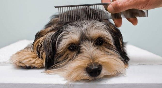 Колтуны у собаки: причины и способы решения проблемы