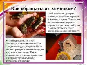ᐉ как избавиться от ласки - обзор проверенных способов - zooon.ru