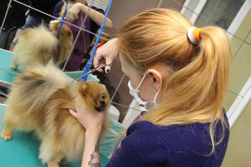 Кто стрижет собак. как открыть парикмахерскую для животных