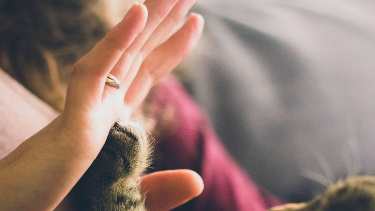 Как понять, что ваш кот затаил обиду: характерные признаки расстроенного кота