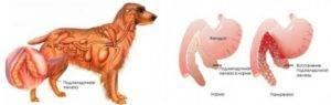 Почему собака вырвала еду, как помочь питомцу?