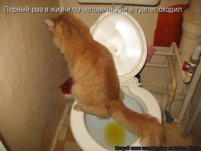 Когда котята начинают ходить в туалет самостоятельно и есть сами