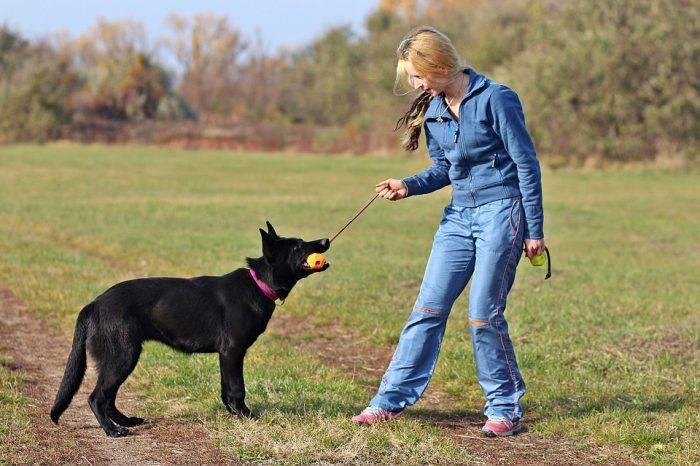 Замок у собак: почему собаки слипаются при спаривании, что делать и как разъединить собак при вязке