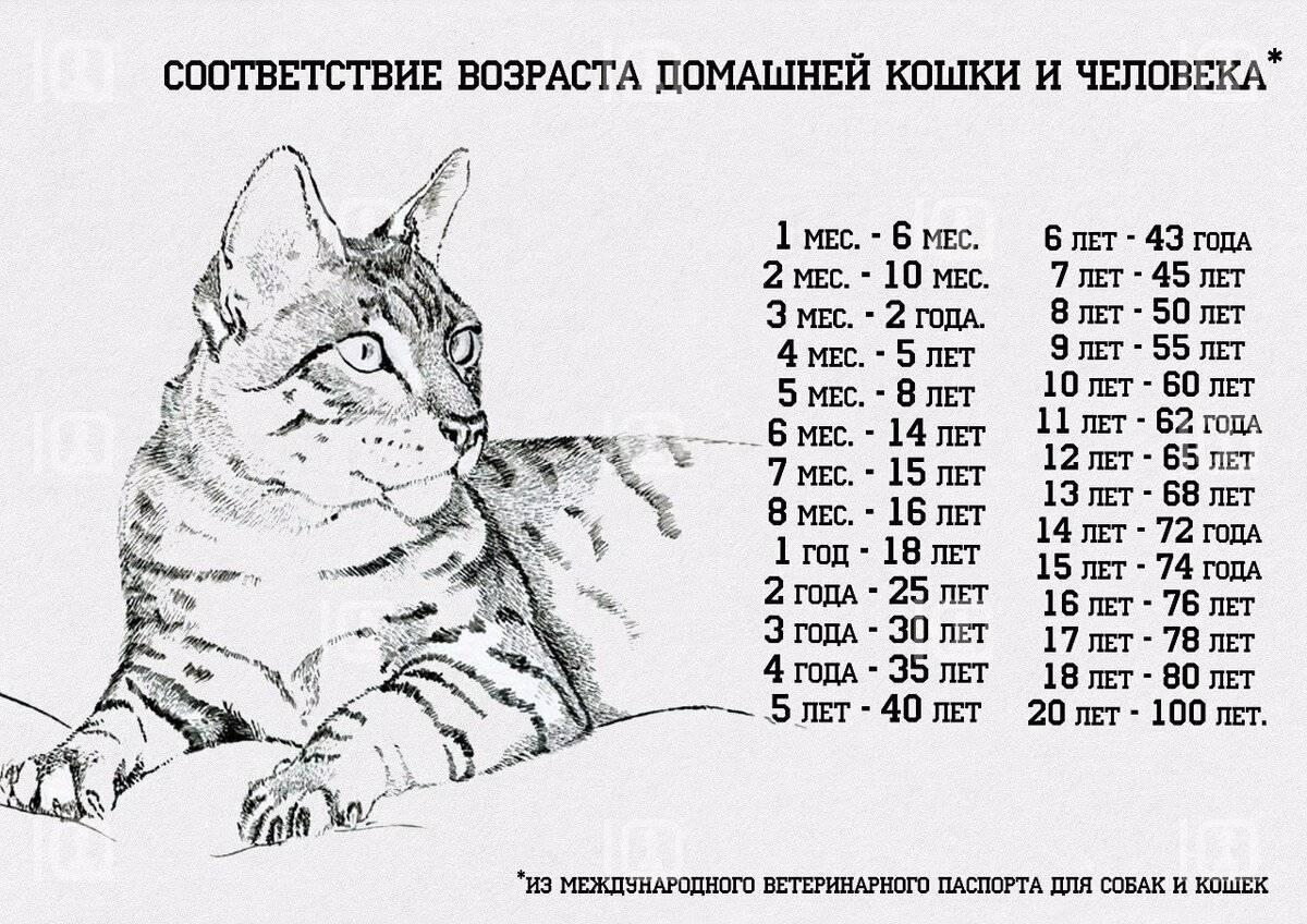 5 признаков старости у кошек - домашние животные