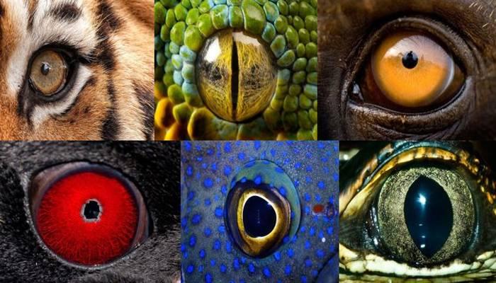 Как видят собаки цвета   фото, окружающий мир, какое зрение