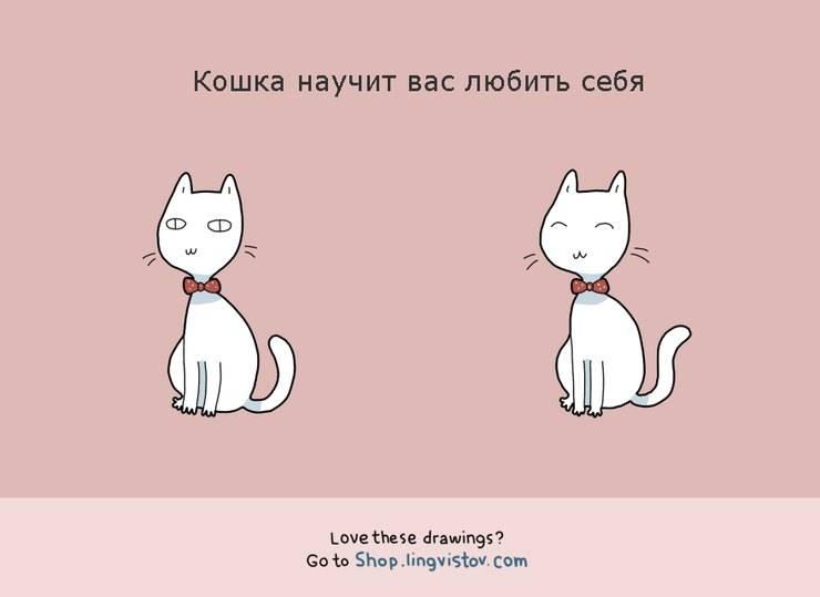 Как подружить двух кошек или котов в одной квартире