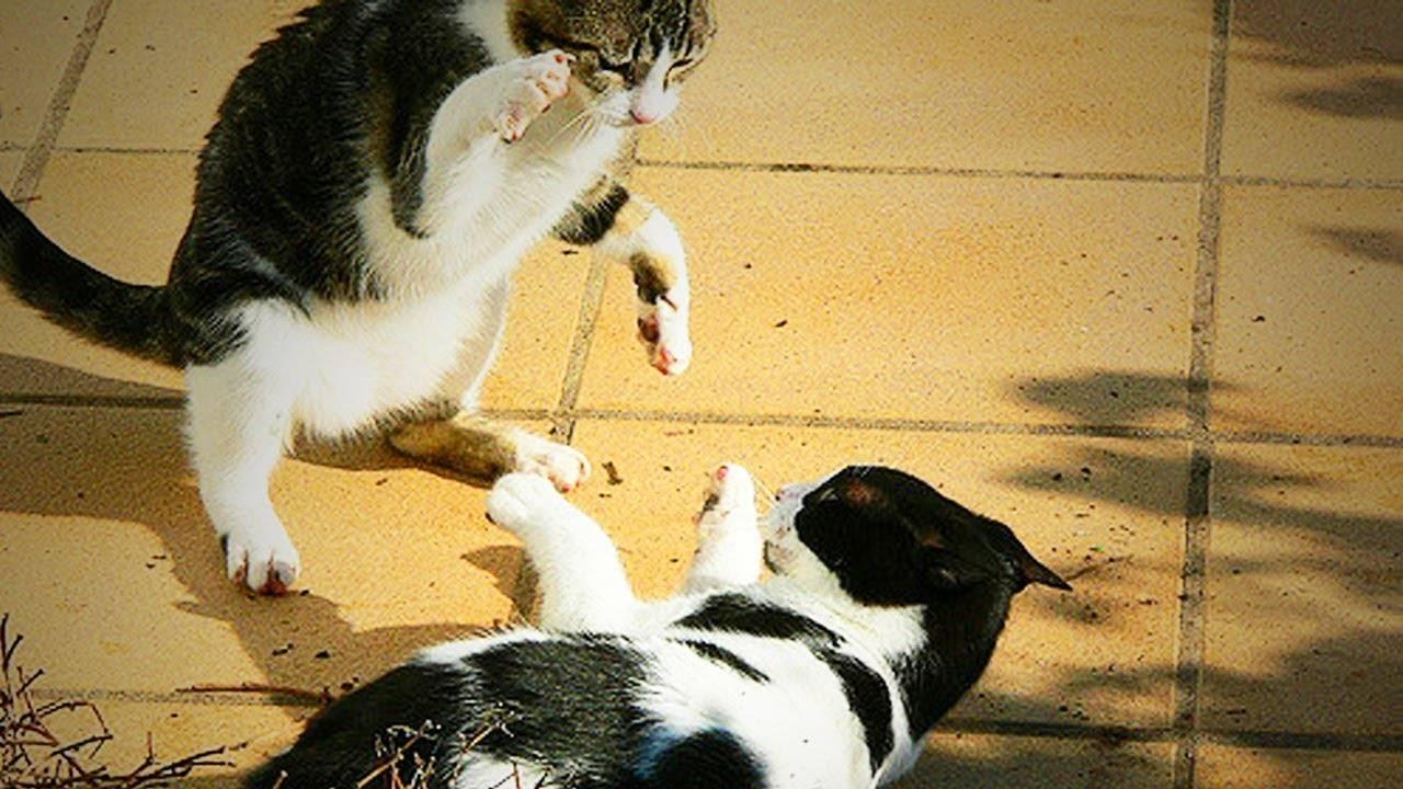 Причина нападения котов на своих хозяев: кидается и кусает, примеры как отучить