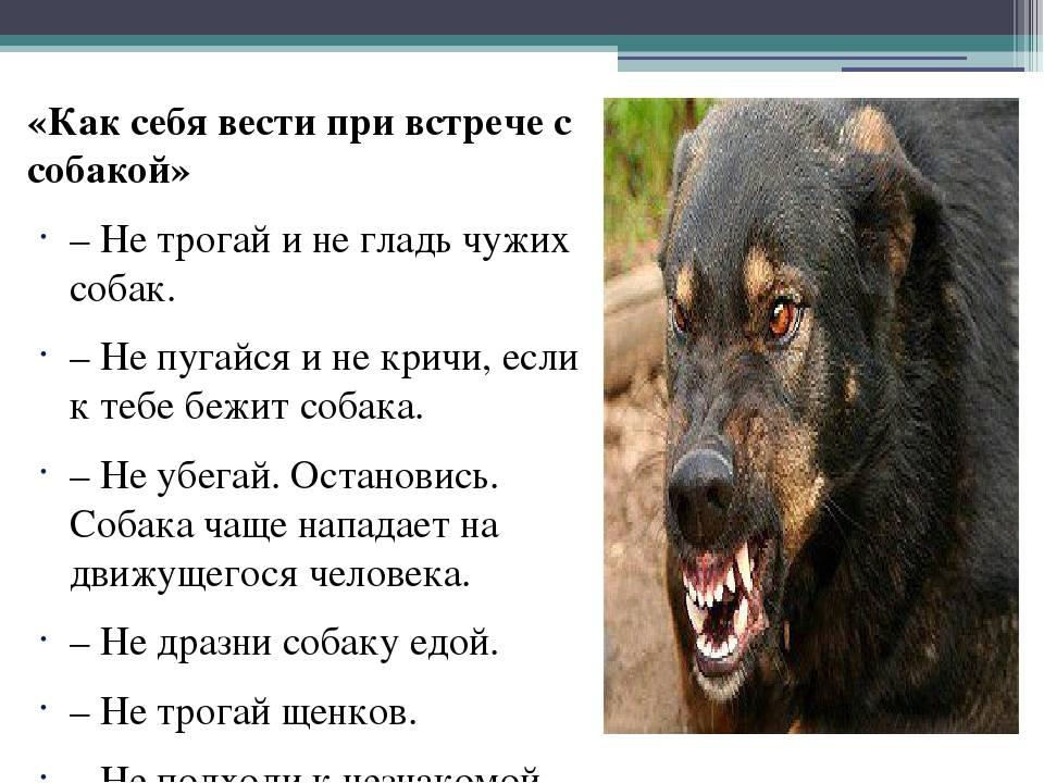 8 научно обоснованных причин завести собаку - лайфхакер