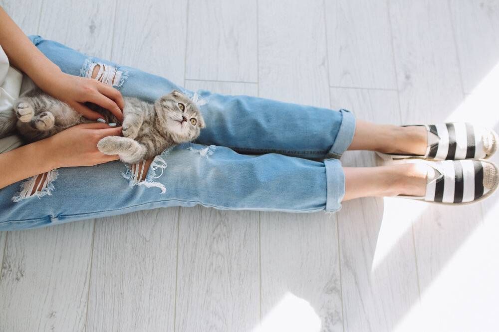 10 «нельзя» для хозяина кошки. уход, питание, кормление. фото — ботаничка.ru