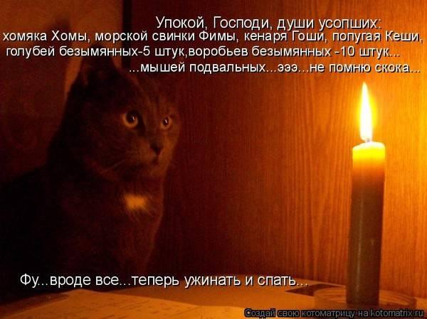 Есть ли у кошек память, и как долго они помнят людей, события, обиды