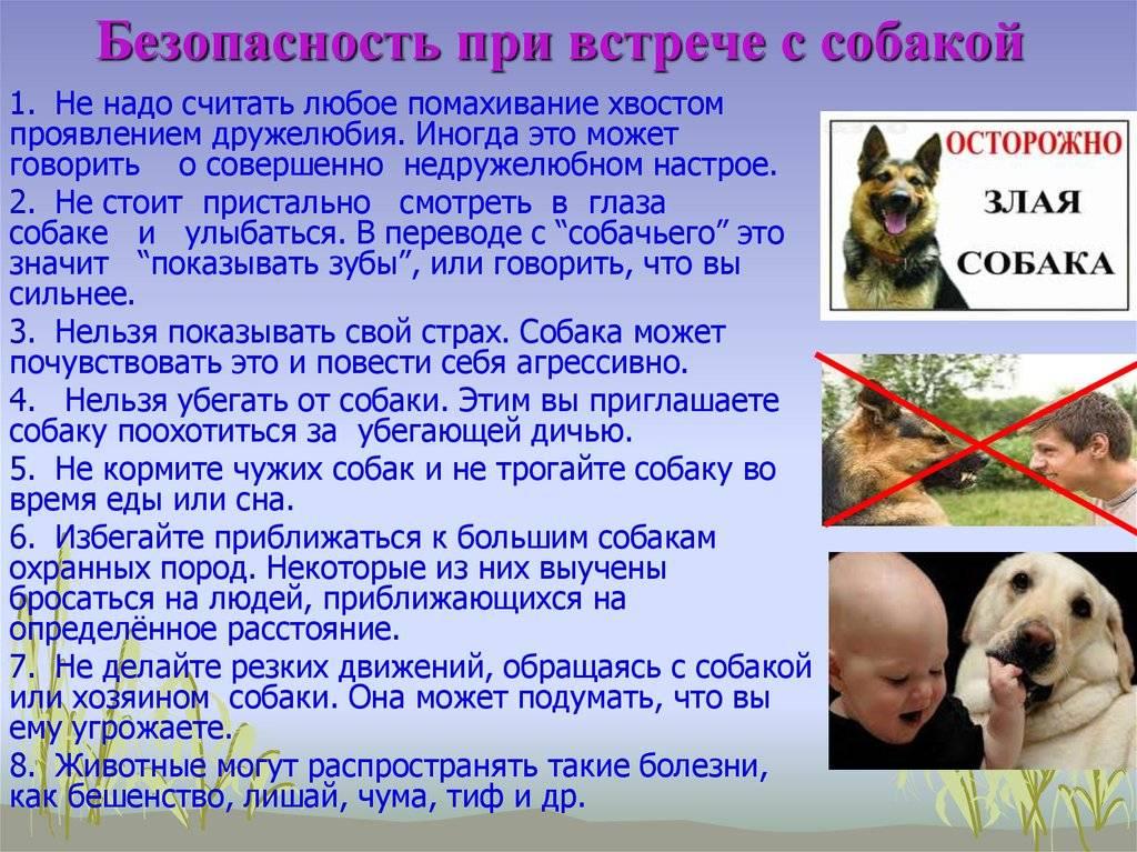 Что делать, если напала собака — как обезвредить - инструкция