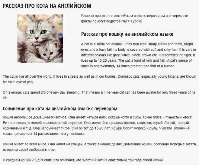 Имена для котов на английском языке, американские клички и тайна имени