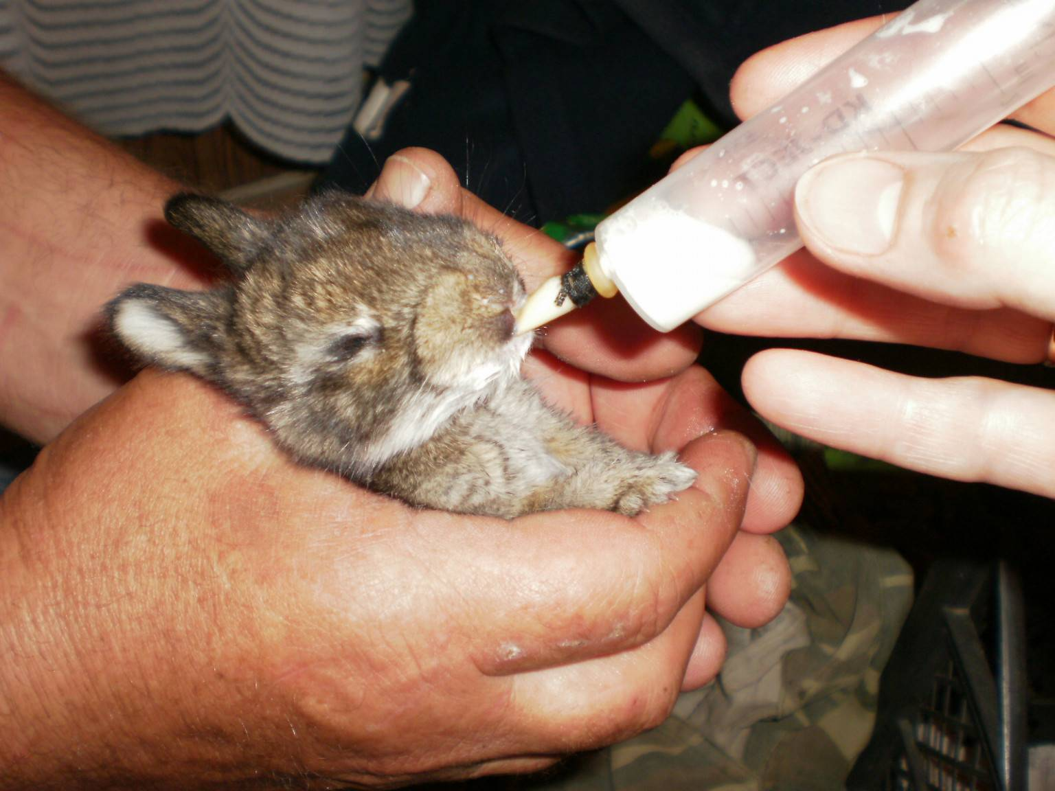 Рацион кролика в сутки - норма кормления кроликов в день