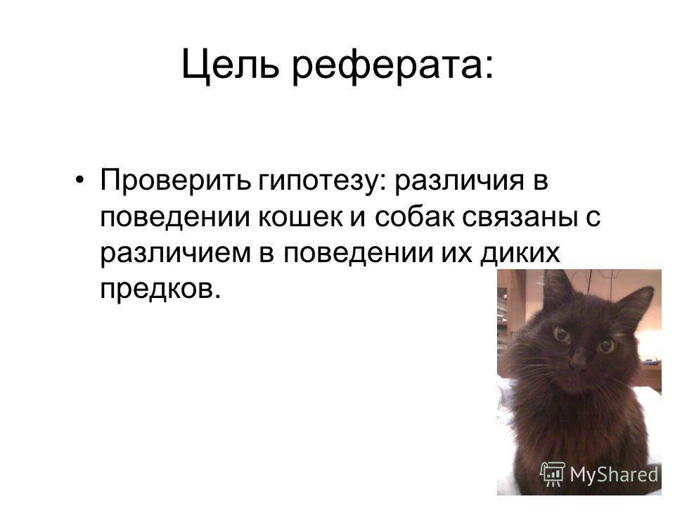 Психология кошек – отношения с людьми