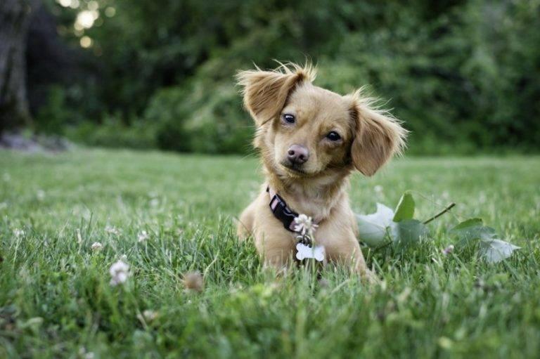 Популярные клички для собак девочек, популярные имена в россии, сша, из фильмов и др.