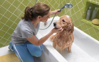 Дегтярное мыло от блох у кошек и собак – отзывы, инструкция по применению