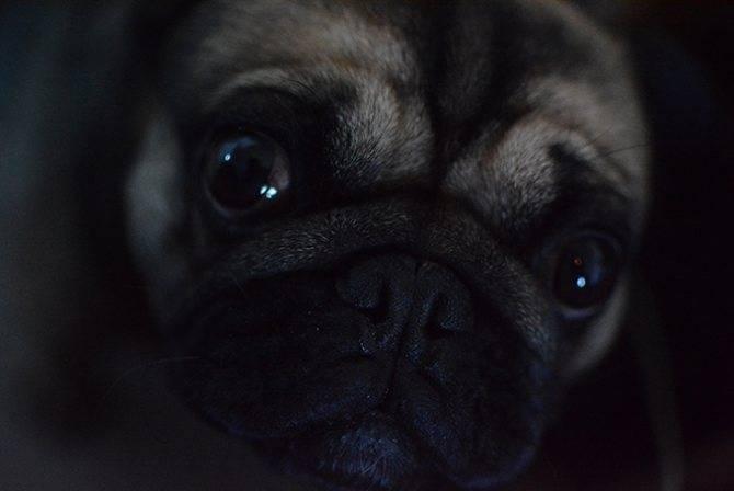 Зрение собаки и его проверка