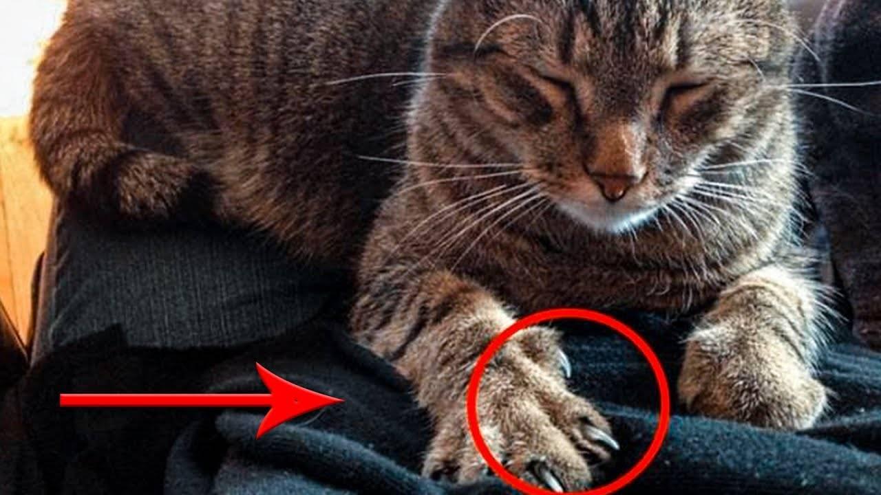 Зачем кошке топтать вас лапками: основные причины такого поведения