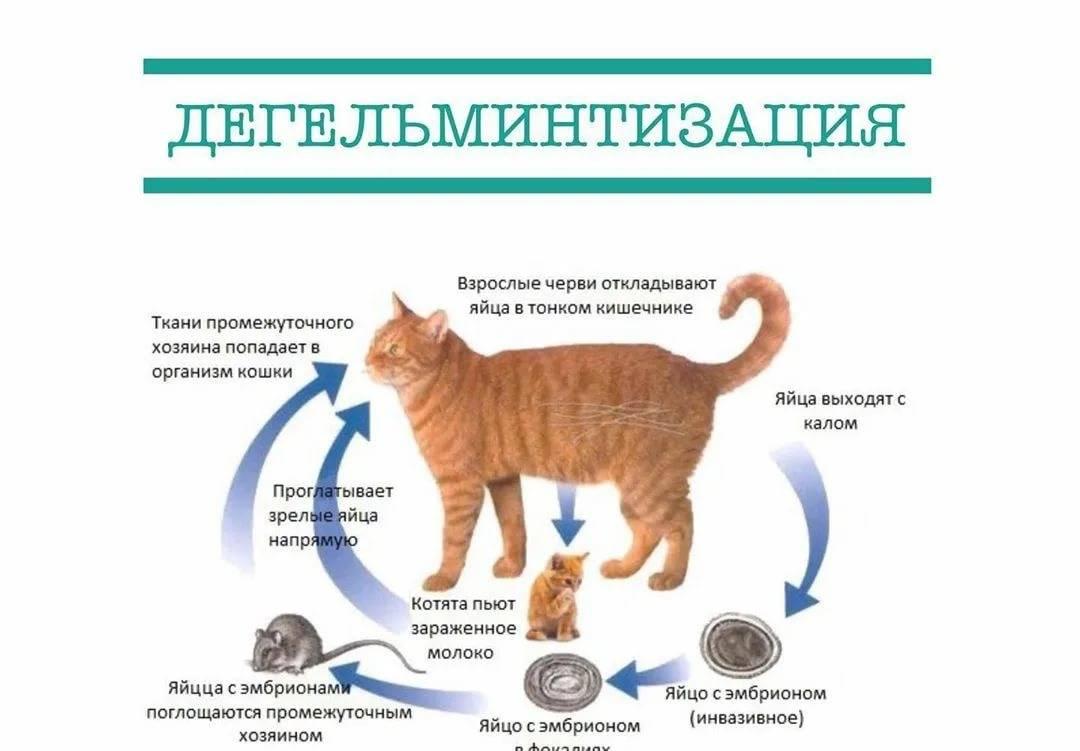 Глисты у собак: симптомы, лечение и профилактика