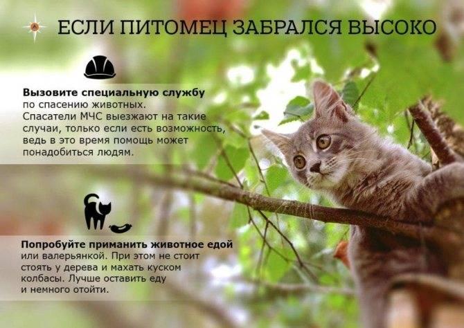 Как снять с высокого дерева котенка или взрослую кошку, какая служба поможет и сколько это стоит?