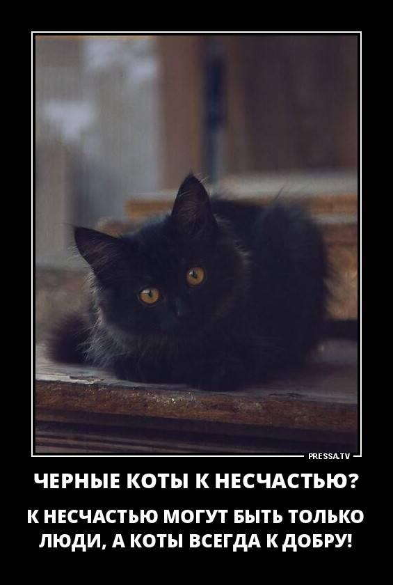 Черная кошка в доме: какие существуют приметы