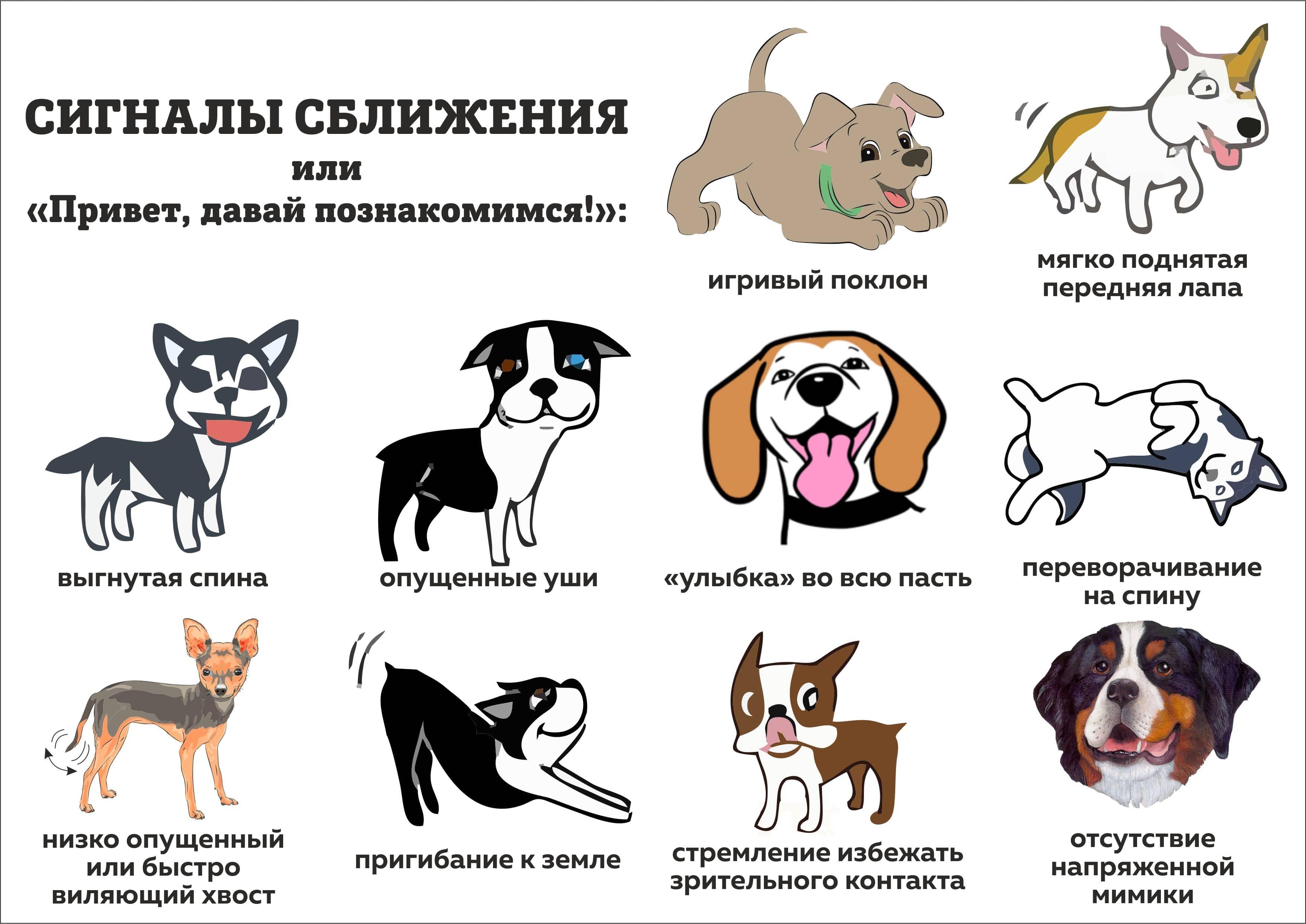 Собака - друг человека или верный слуга вожака стаи?   ветпрактика
