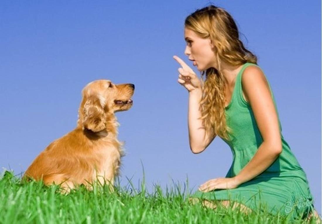 Как отучить собаку прыгать на хозяина, почему щенки это делают