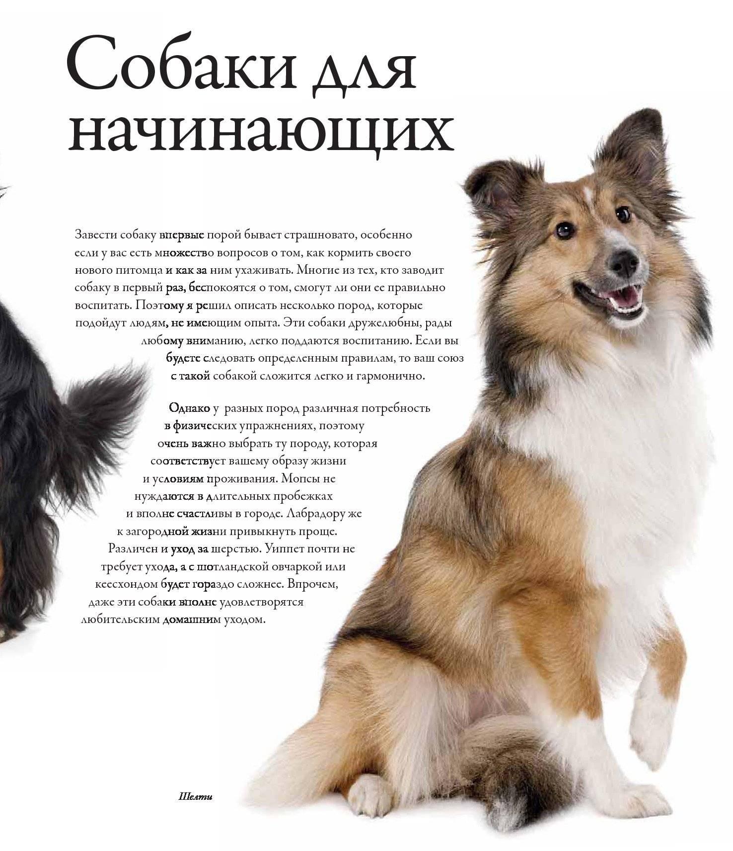 ≡ топ 16 ᐈ лучшие породы собак для квартиры | woofy dog