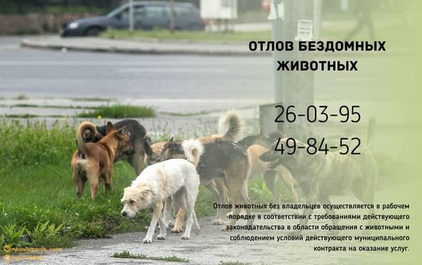 Отлов бродячих собак, куда обращаться — правовед.ru