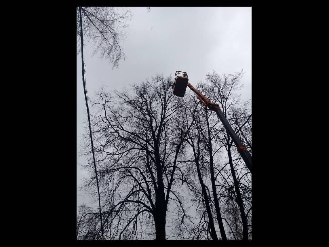 Как снять кошку с дерева, служба снимающая кота с высокого дерева