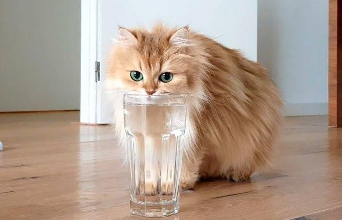 Ваша кошка не пьёт воду? 10 способов заставить вашего кота выпить больше воды - стиль жизни 2020