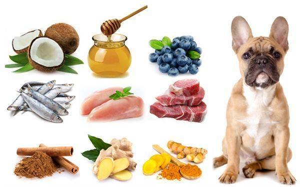 Смешанное питание собак.как правильно?для каких собак подойдет?(wolcha.ru)