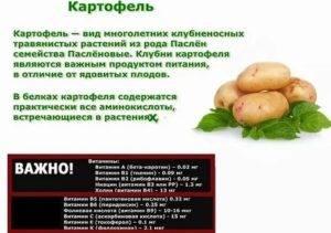 Картофель в рационе собак