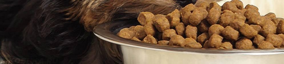 Можно ли смешивать сухой корм и натуральный в рационе зверей?