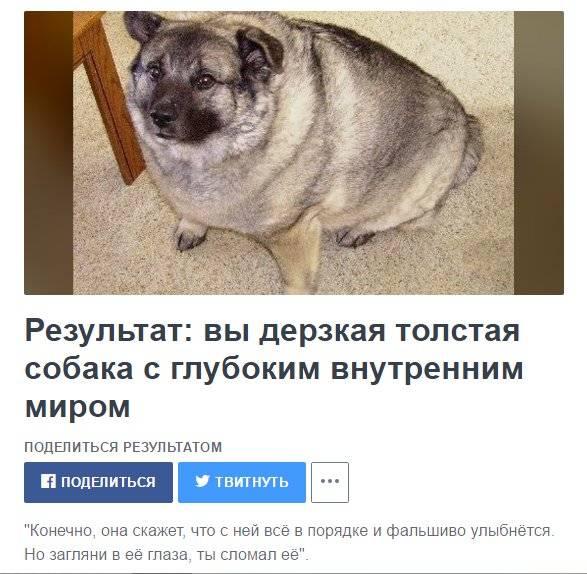 7 самых толстых собак в мире и как они выглядят