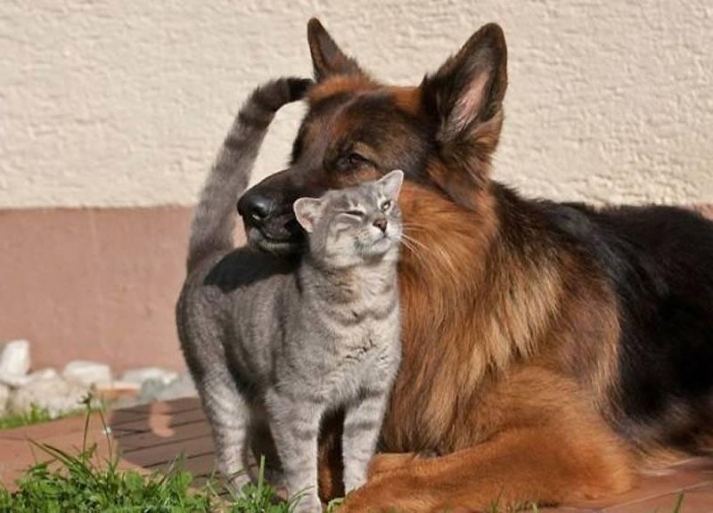 Самые преданные породы собак