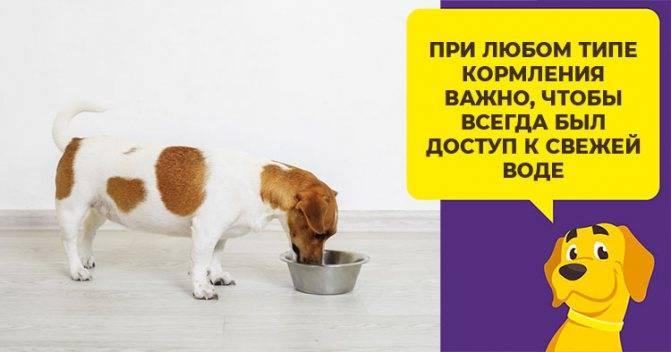 Как и чем кормить щенка правильно - jackrussell.pro